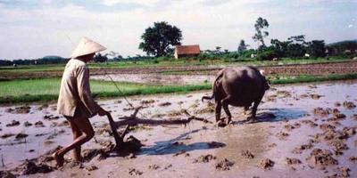 riziculture Vietnam